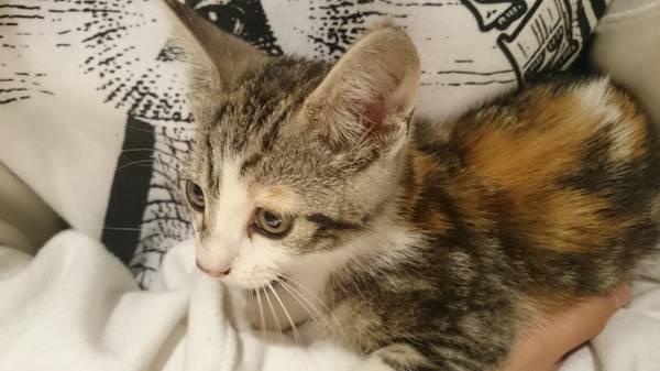 Cats For Sale in Rapid City South Dakota Craigslist