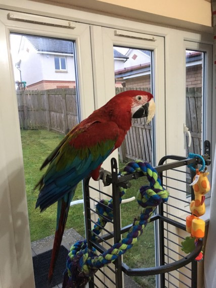 South Dakota Parrots For Sale classifieds  Buy and Sell, Browse or